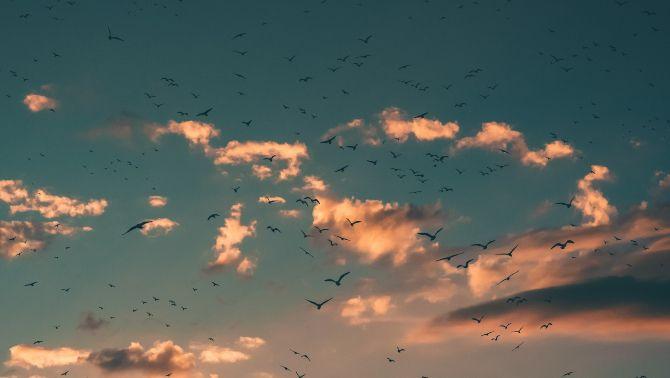 Els ocells estan canviant la manera de cantar durant el confinament