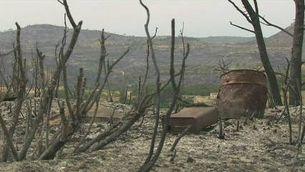 Un foc estabilitzat i l'altre que pot ser controlat avui al País Valencià