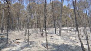 Els propietaris forestals demanen incentius a la gestió del bosc com a mesura per prevenir incendis