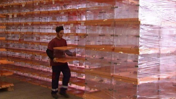 L'adquisició de 8.000 urnes és un pas més per poder celebrar el referèndum