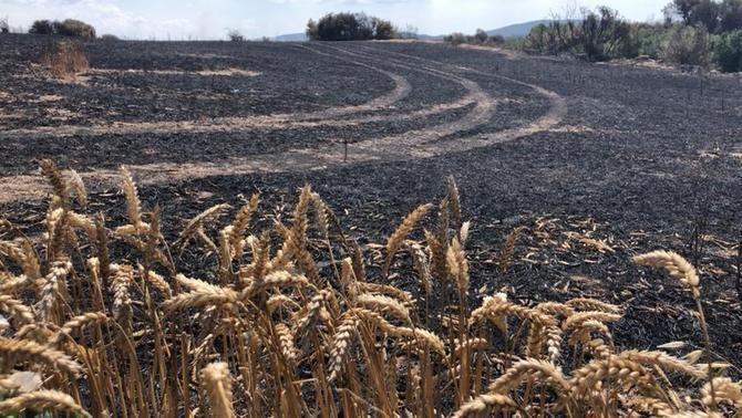 L'incendi va començar en una zona agrícola i els primer minuts va avançar ràpidament pels camps