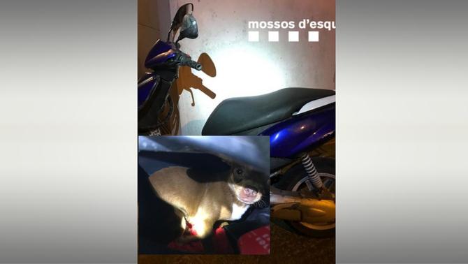 Denunciat per deixar el gos tancat sota el seient de la moto al Vendrell