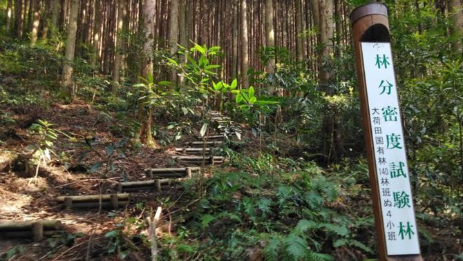 Hi ha tota una xarxa de camins per visitar la selva de cedres de l'ìlla de Kyushu