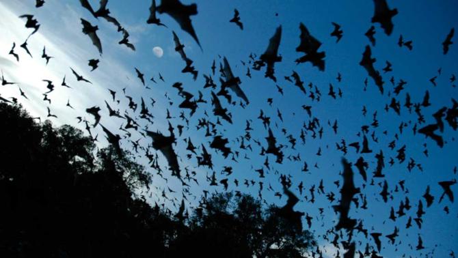Ratpenats a la Bracken Cave de San Antonio, Texas