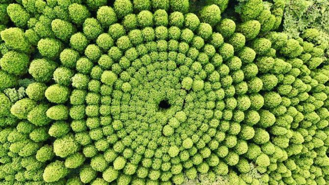 D'experiment agrari a atracció turística: el misteri del bosc circular japonès
