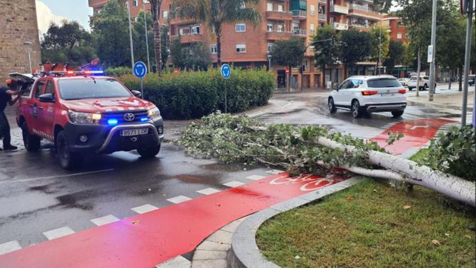 S'han retirat arbres caiguts durant les tempestes que han afectat l'Hospitalet, Viladecans, Sant Cugat del Vallès i Sant Andreu de la Barc…